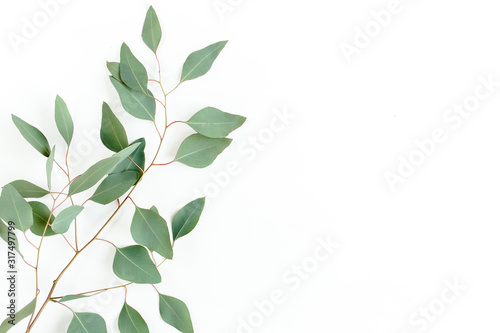 Obraz Eucalyptus branch isolated on white background. Flat lay, top view. floral concept - fototapety do salonu