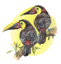 A Couple Of Toucans On A Branc...