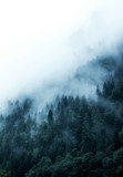 green forest in the mountains covered with dense fog - 317527591