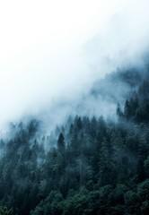 Fototapeta Optyczne powiększenie green forest in the mountains covered with dense fog
