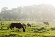 日本の北海道東部・9月の牧場、逆光の朝靄に浮かぶ馬のシルエット