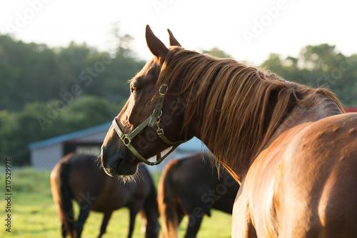 Fotografía 日本の北海道東部・9月の牧場、逆光の朝靄に浮かぶ馬のシルエット