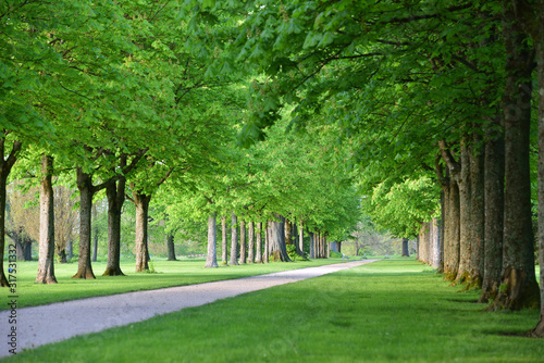 Photo Beautiful alley of trees in a European garden in spring