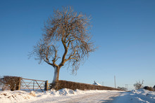 Trees In The Snow Outside Auchinleck