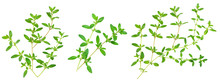 Fresh Thyme Spice Isolated On ...