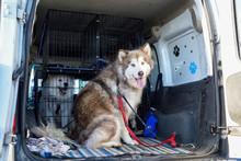 Animal Dog Walkers Transportin...
