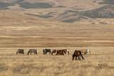 Wild Horses in Autumn in the Utah Desert