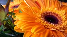 Blumenstrauß Mit Orange Gerbera Teilaufnahmen