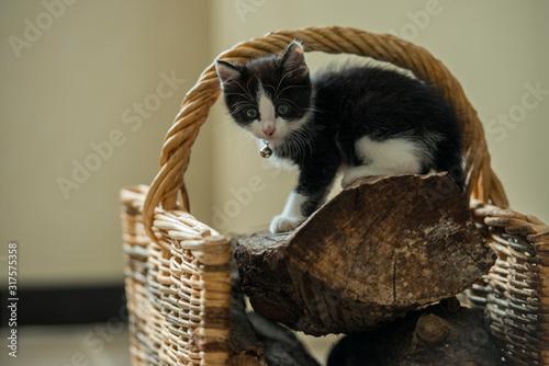 Photo Chaton de 2 mois nommé Domino jouant sur un panier de bois de chauffage