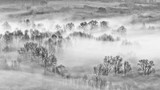 Lasy liściaste owinięte mgłą - 317582177