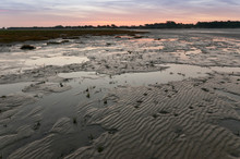La Slikke En Baie De Somme