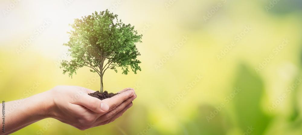Fototapeta Hand holding tree. Save nature, ecology concept