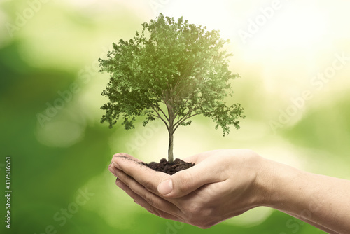 Fototapeta Hand holding tree. Save nature, ecology concept obraz