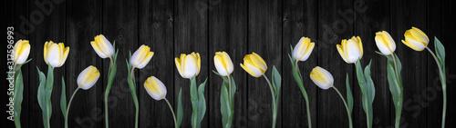Plakat Panorama przedstawiająca żółte tulipany na czarnym tle