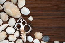 Sea Shells Background On Woode...
