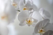 A Close Up Of Beautiful White ...
