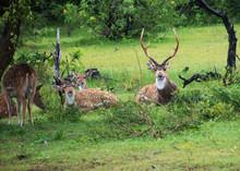 Sri Lanka, Yala National Park ...