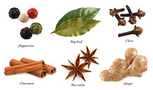 Peppercorn, Bay Leaf, Dried Cloves, Cassia Cinnamon, Star Anise, Ginger Root. 3d Vector Realistic Objects