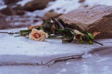 Roses On Frozen Stream