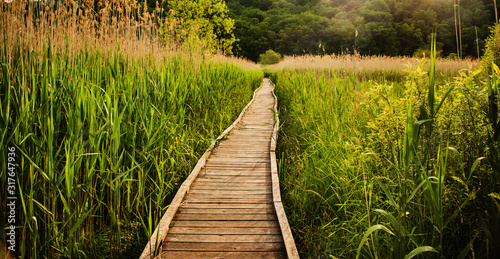 Footpath through the Appalachian Trail in New York State - 317647936