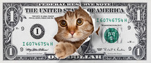 Funny Money One Cat Dollar Des...