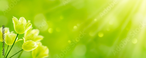 Photo weiße tulpen in abstrakter frühlingslandschaft
