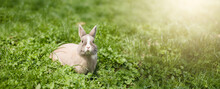 Little Funny Dwarf Rabbit Showing A Tongue. Easter Bunny On A Green Background.