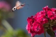 Closeup Shot Of A Hummingbird ...