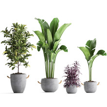 Plant In Concrete Pot Isolated...
