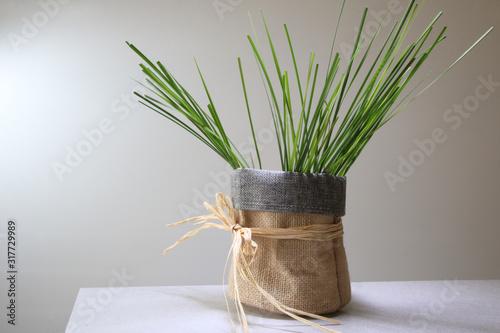 Fotografering Fili d'erba, in sacchetto di juta con nastro di rafia, isolato su fondo chiaro