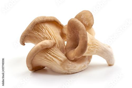 Fotografie, Tablou Oyster mushrooms, fresh mushroom, isolated on white background
