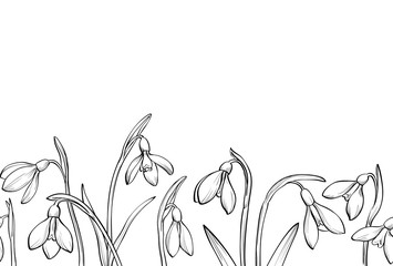 Vector seamless border with hand drawn snowdrops on white background.