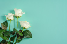 Three White Roses Isolated On ...