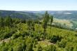 Hohe Fichten und junger Wald in den Bergen