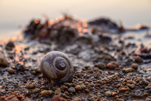 Snail Shells Beside At The Lake