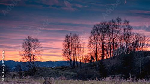 Brzozy o zachodzie słońca, piękne pomarańczowe niebo, złota godzina - 317767386