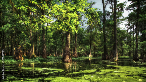 Fotografia, Obraz Au coeur du Bayou