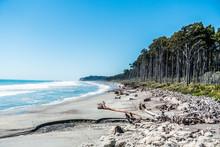 White Beach Full Of Dead Wood ...