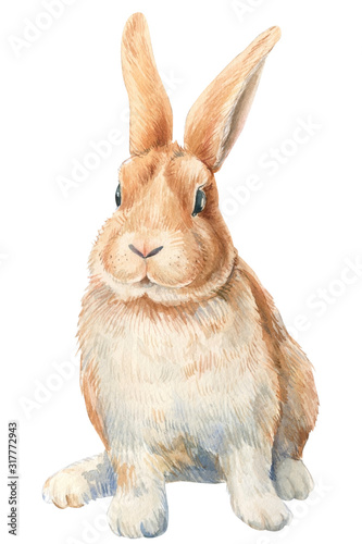 Fotografía Bunny on an isolated white background, watercolor illustration, cute animal, easter bunny