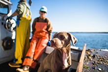 Boat Dog Joining For Aquacultu...
