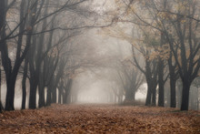 Fog In The Autumn Park, Yellow...