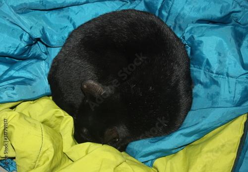 Fotografia chat noir qui dort en rond