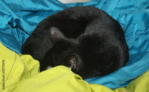 chat noir qui dort en rond Fototapeta