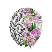 Brain Semispheres, Right Semisphere Is Composed Of Peonies