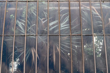 Detail Of Glasshouse Housing T...
