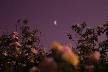 LOW ANGLE VIEW OF FLOWERING PLANTS AGAINST SKY AT NIGHT