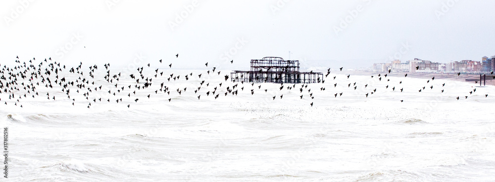 Fototapeta Stormy seas and starlings