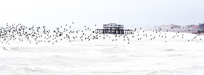Stormy seas and starlings