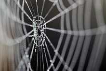 Toile D'araignée Macro