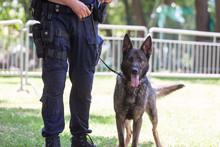 Policeman With Belgian Shepher...